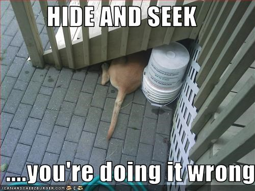 HIDE AND SEEK   ....you're doing it wrong
