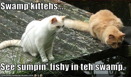 Swamp kittehs...  See sumpin' fishy in teh swamp.