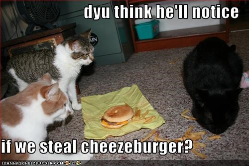 dyu think he'll notice  if we steal cheezeburger?