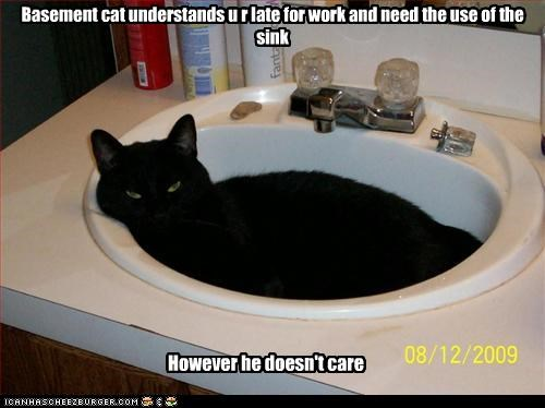 Basement cat understands u r late for work and need the use of the sink