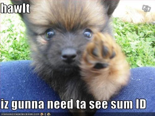 guard dog,halt,id,paw,pomeranian,puppy,stop
