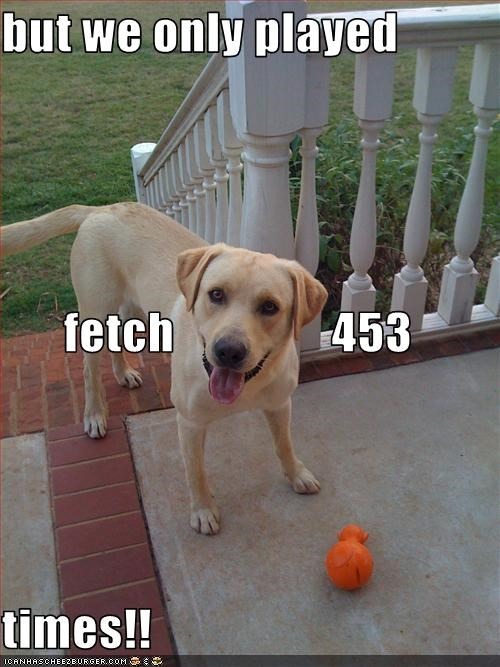 but we only played fetch                453 times!!
