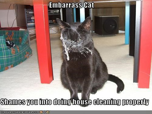 Embarrass Cat  Shames you into doing house cleaning properly