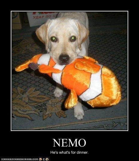 finding nemo,fish,labrador,stuffed animal,toys