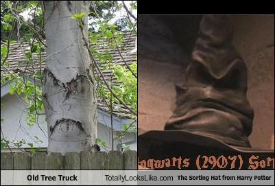 Old Tree Truck Totally Looks Like The Sorting Hat from Harry Potter