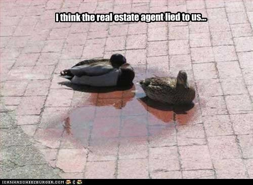 I think the real estate agent lied to us...