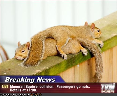 Breaking News - Monorail Squirrel collision.  Passengers go nuts.  Details at 11:00.
