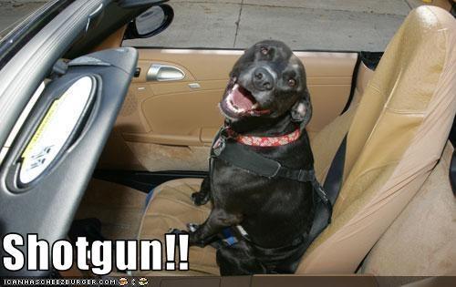 cars,carseat,convertible,pitbull,riding,shotgun