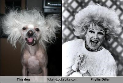 Chinese Crested Dog,comedian,dogs,hair style,phyllis diller