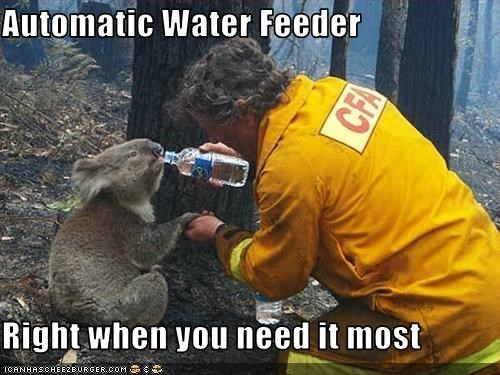 david tree,fireman,rescue,sam the koala,water