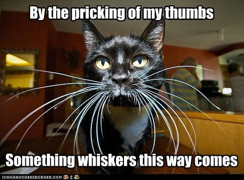 Something whiskers this way comes