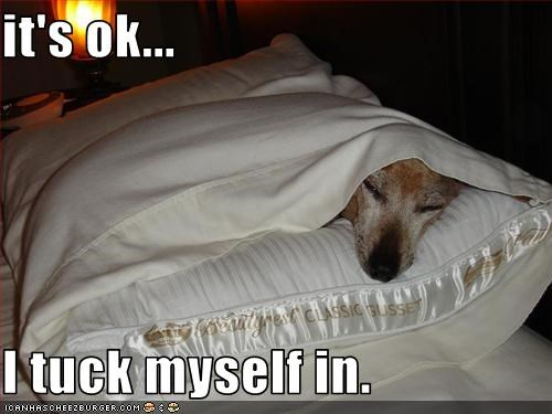bed,Pillow,sleep,tucked in,whatbreed