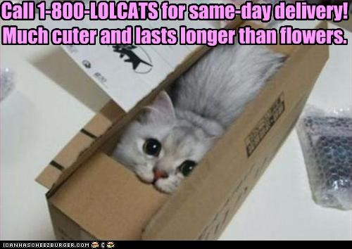 Call 1-800-LOLCATS for same-day delivery! Much cuter and lasts longer than flowers.