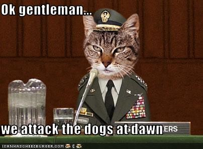 Ok gentleman...  we attack the dogs at dawn
