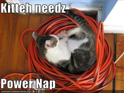 Kitteh needz  Power Nap
