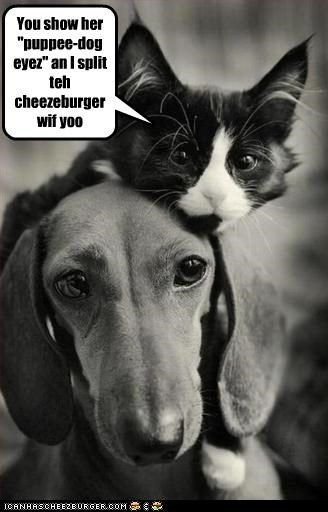 "You show her ""puppee-dog eyez"" an I split teh cheezeburger wif yoo"