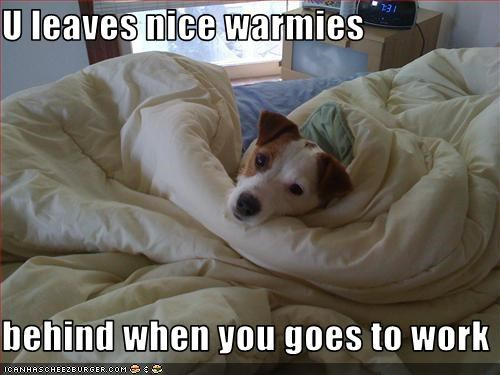 bed,blanket,human,jack russel terrier,leaves,nice,warm,work