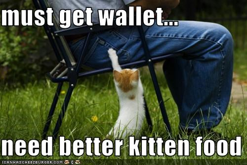 must get wallet...  need better kitten food