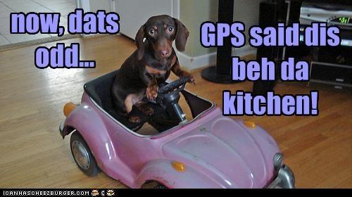cars,dachshund,driving,gps,kitchen,toys