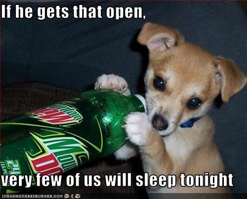 awake,caffeine,chihuahua,drink,mountain dew,puppy,sleep,soda