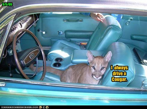 I  always drive a Cougar.