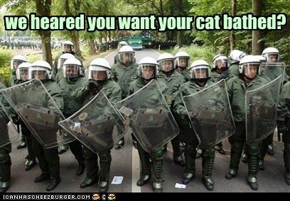 we heared you want your cat bathed?