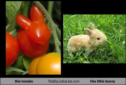 this tomato Totally Looks Like this little bunny