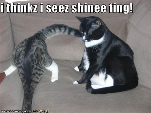 i thinkz i seez shinee fing!