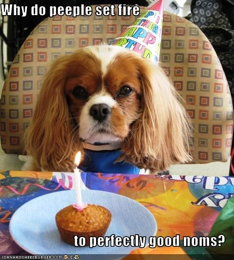 birthday,candle,cavalier king charles spaniel,cupcake,fire,food,hat,nom