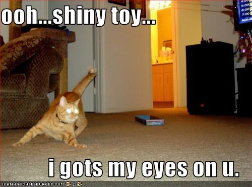 ooh...shiny toy...  i gots my eyes on u.