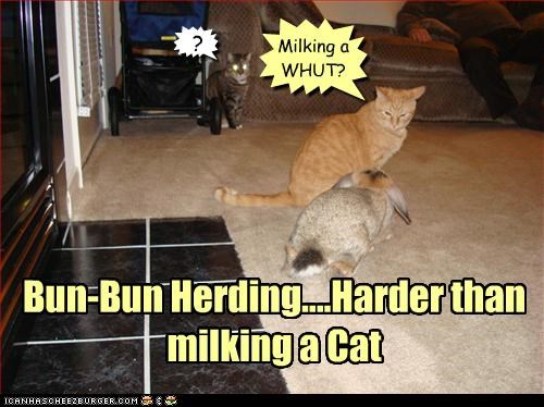 Bun-Bun Herding....Harder than milking a Cat