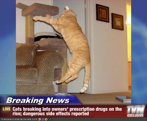 Breaking News - Cats breaking into owners' prescription drugs on the rise; dangerous side effects reported