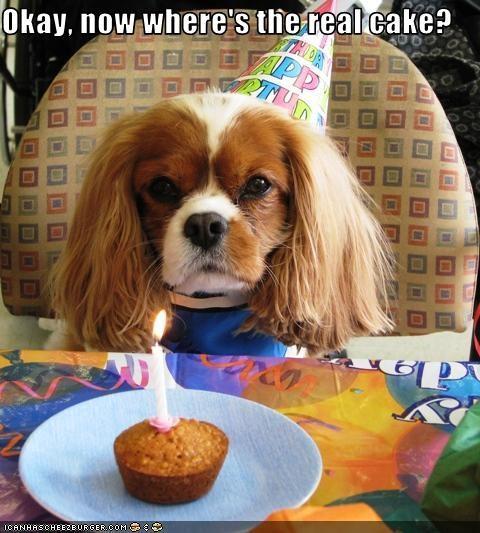Okay, now where's the real cake?