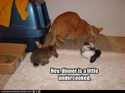 Hey, dinner is a little undercooked.