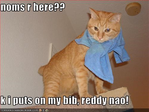noms r here??  k i puts on my bib, reddy nao!