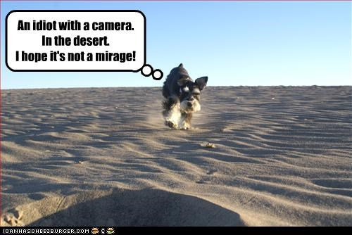 An idiot with a camera.   In the desert.  I hope it's not a mirage!