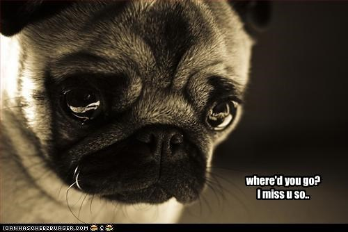 frown,miss,pug,Sad,where