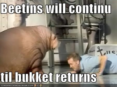 Beetins will continu  til bukket returns