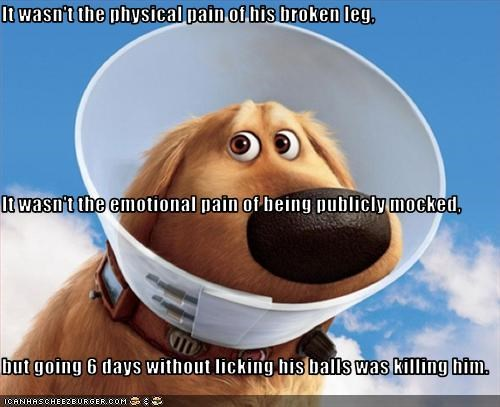 It wasn't the physical pain of his broken leg, It wasn't the emotional pain of being publicly mocked, but going 6 days without licking his balls was killing him.