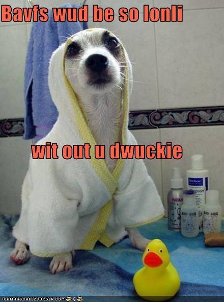 bath,bathrobe,bathroom,chihuahua,rubber duck