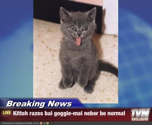 Breaking News - Kitteh razes bai goggie-mai neber be normal