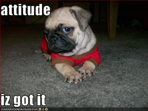 attitude  iz got it