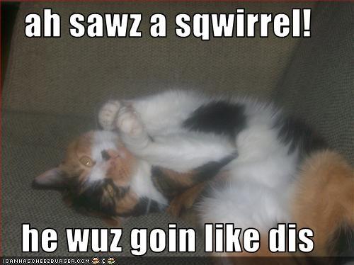 ah sawz a sqwirrel!  he wuz goin like dis
