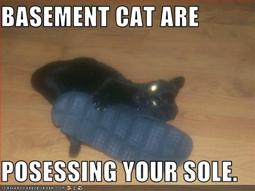 BASEMENT CAT ARE  POSESSING YOUR SOLE.
