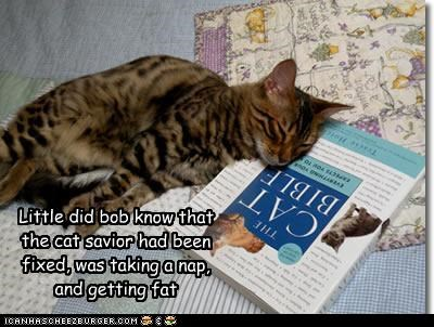 Little did bob know that the cat savior had been fixed, was taking a nap, and getting fat