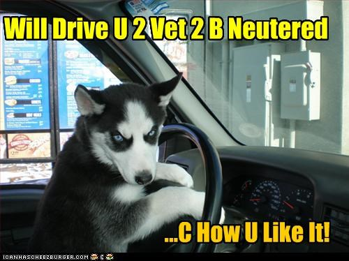 Will Drive U 2 Vet 2 B Neutered