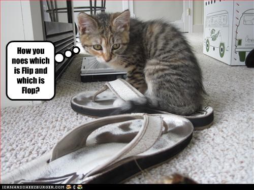 How you noes which is Flip and which is Flop?