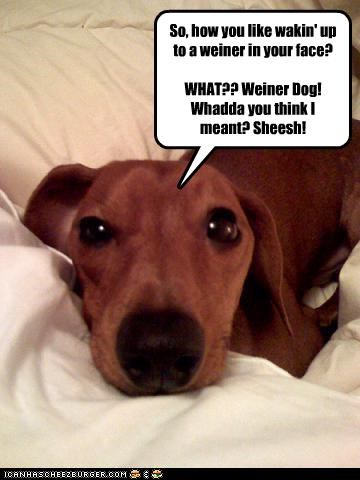 So, how you like wakin' up to a weiner in your face?  WHAT?? Weiner Dog! Whadda you think I meant? Sheesh!