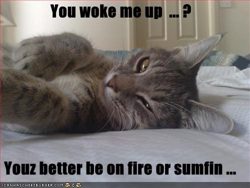 You woke me up  ... ?   Youz better be on fire or sumfin ...