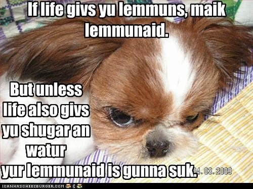 grumpy,havanese,lemonade,lemons,life,problem,suck,trouble